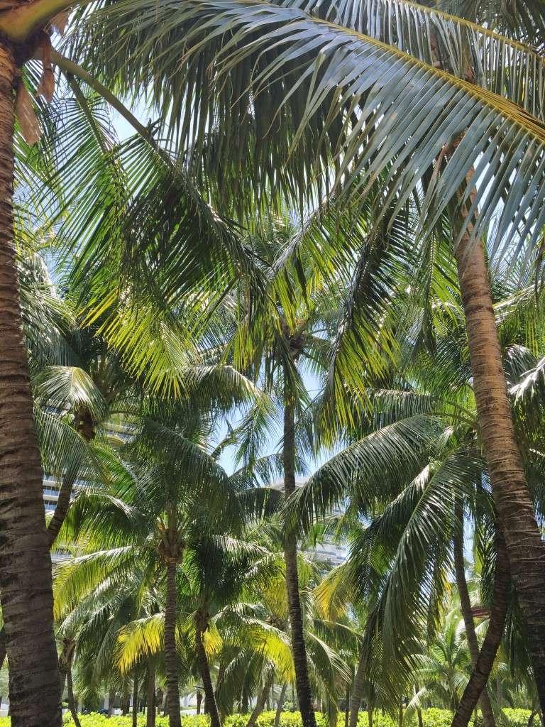 Palm Trees on Rhyme & Reason Fashion Blog