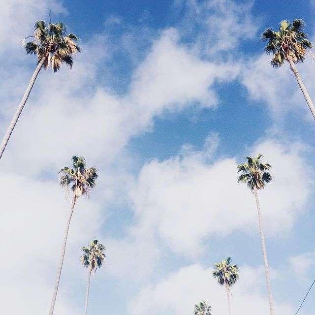 Palm Trees on Rhyme & Reason