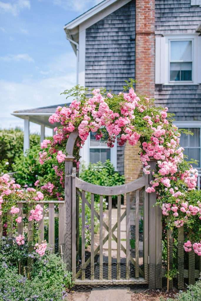 Pink roses in Sconset, Nantucket // Rhyme & Reason