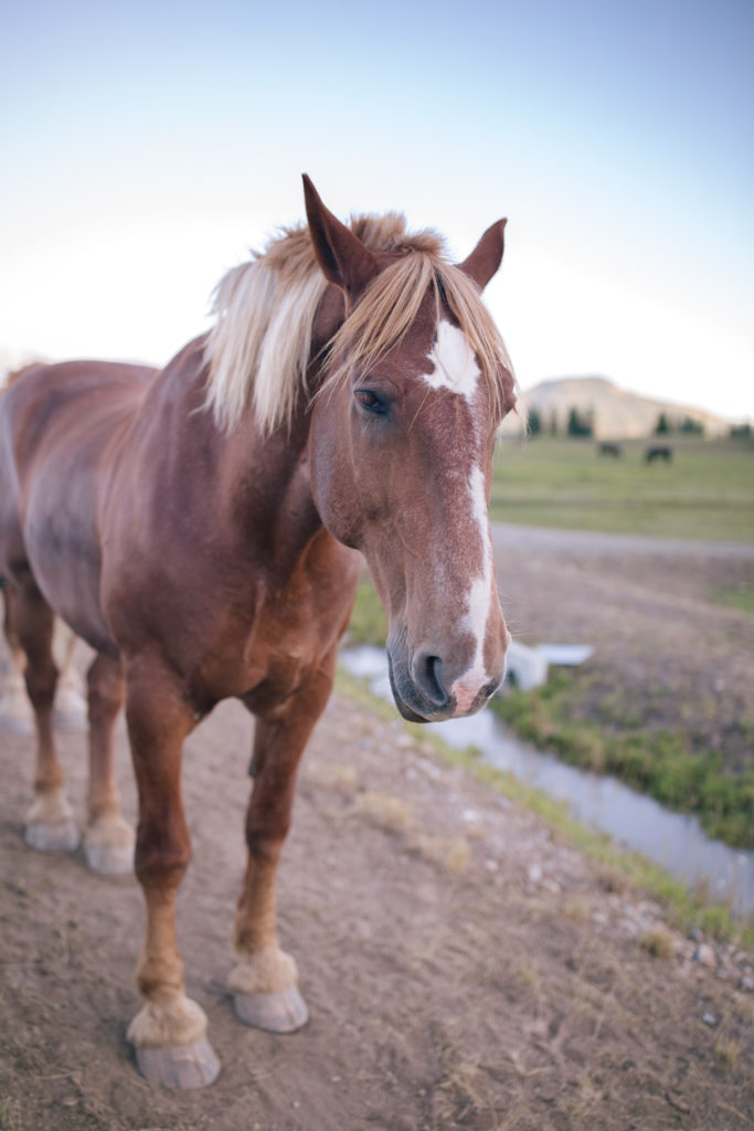 The best time to visit Jackson Hole as shown by this horse