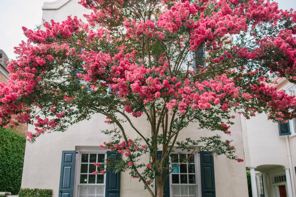 blooming flowers in Charleston