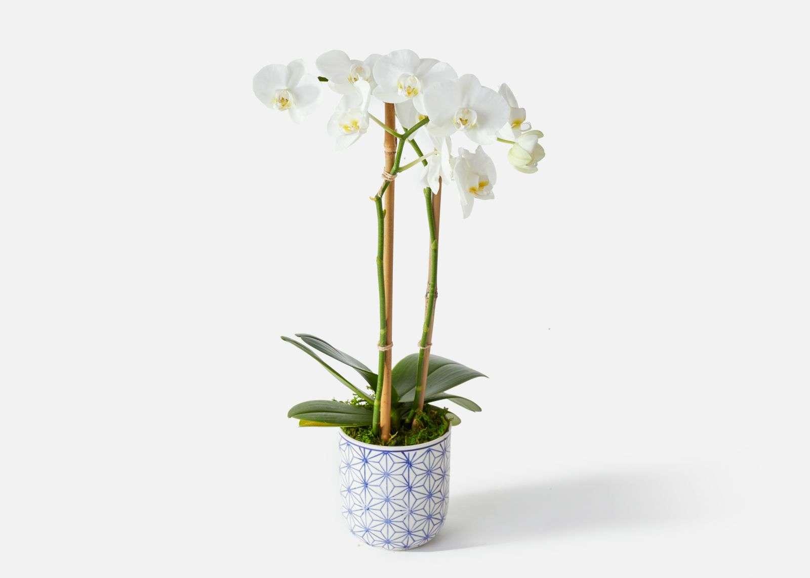 The best online flower shops | Rhyme & Reason