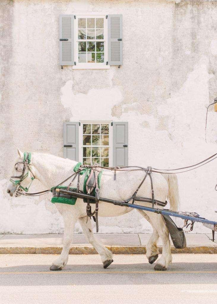 Horse Drawn Carriage in Charleston, South Carolina | Rhyme & Reason