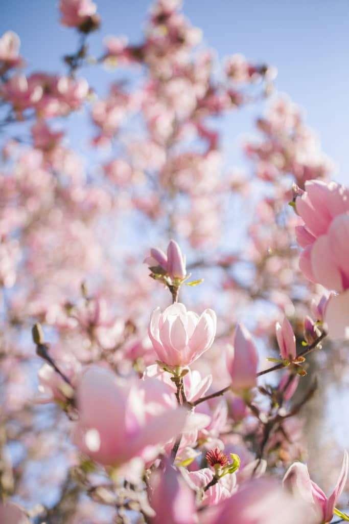 Pink Spring Flowers Blooming in Charleston + Weekend Reads, No. 121 | Rhyme & Reason